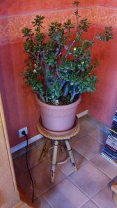 Een plant die we van de schoonmama kregen