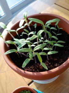 plantje